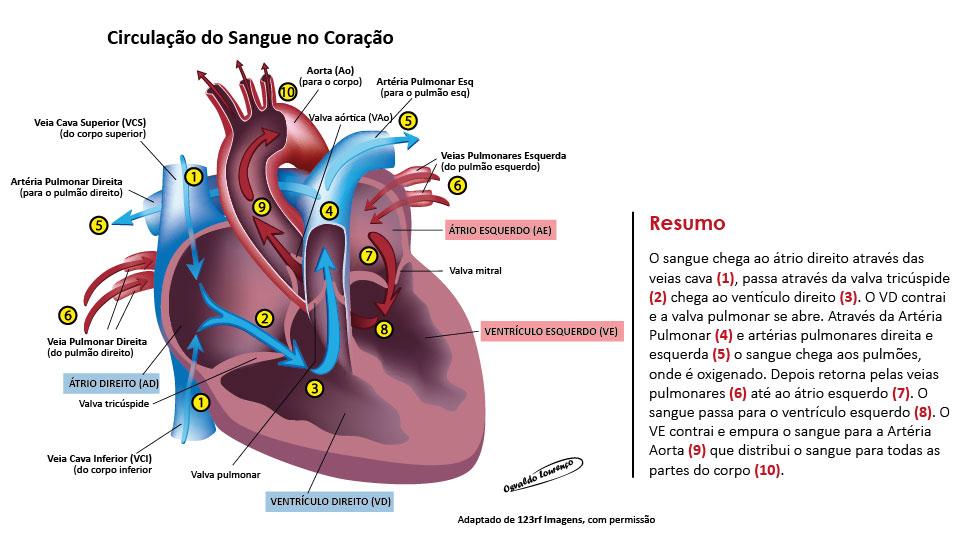 função-cardiaca